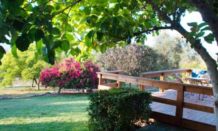 Agrotourism on Moshav Amikam – An Olive Orchard Garden in the Shade