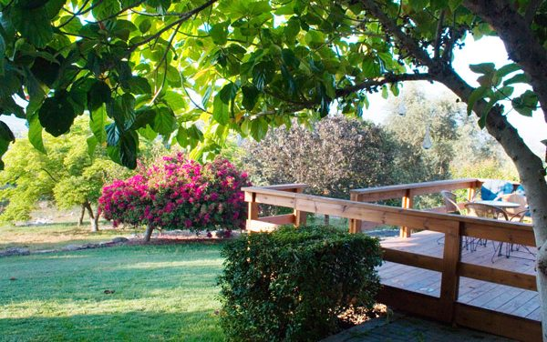 Agrotourism B&B on Moshav Amikam – An Olive Orchard Garden in the Shade