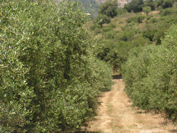 Fruit groves