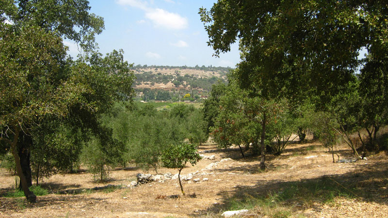 View from olive orchard